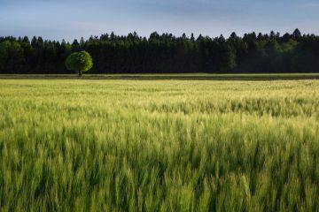 Ciljevi ekološke poljoprivrede